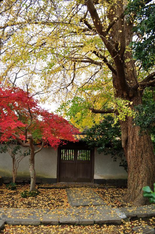 鎌倉市長谷 鎌倉大仏殿