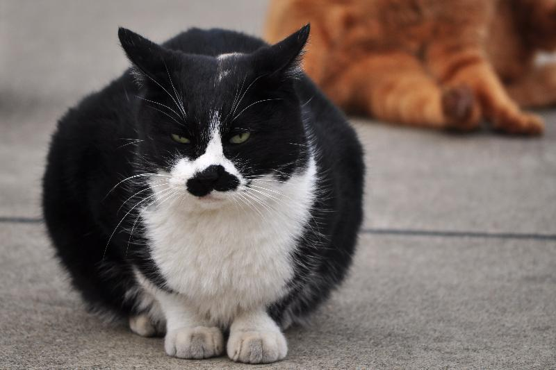 東京芝大門 増上寺境内 猫