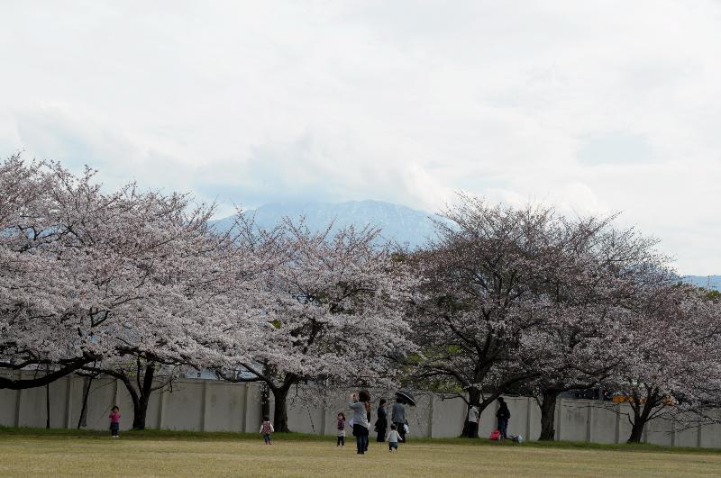 西条市朔日市 クラレ西条事業所 観桜会