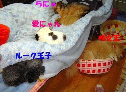 雑多 003 - コピー
