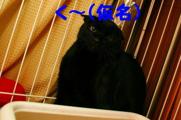 チーコ&く~ 093