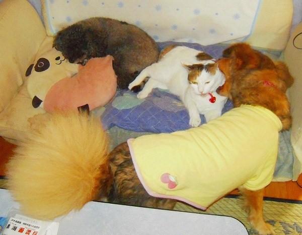 犬&ねこ 092