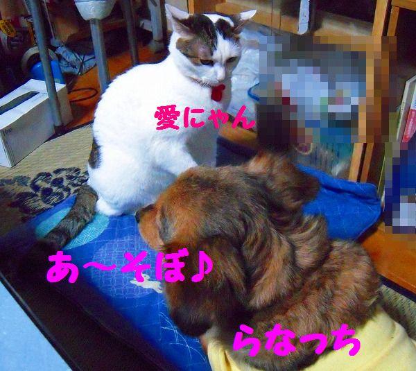 犬&ねこ 097