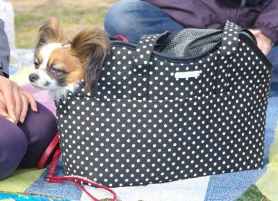 ピクニック 07 2010.03.22