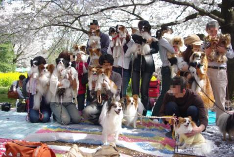 昭和 紹介 00 2010.04.11