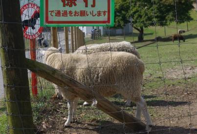 ワン旅行in千葉 15 2010.10.23