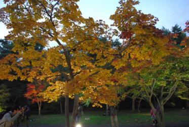 森林公園 05 2010.11.6