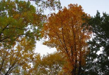 森林公園 04 2010.11.6