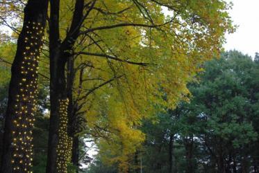 森林公園 02 2010.11.6