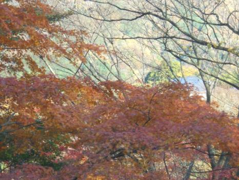 箱根 11 2010.11.28
