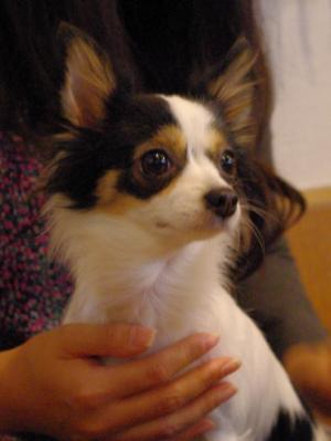 シュワシュワ 04 2010.12.4