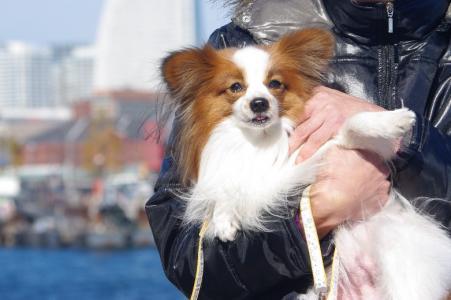 初横浜 03 2011.1.30