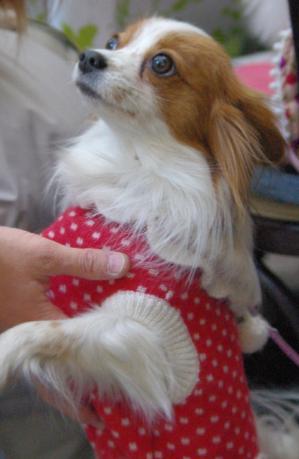 初横浜 18 2011.1.30