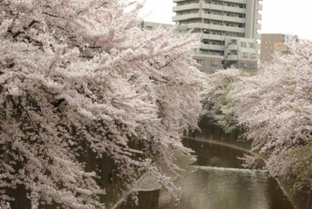 石神井川 03 2011.4.11
