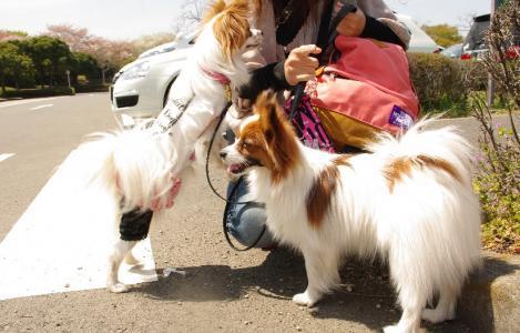 昭和記念公園 03 2011.4.17