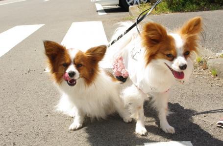 昭和記念公園 04 2011.4.17