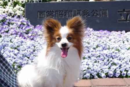 昭和記念公園 02 2011.4.17