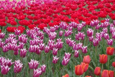 昭和記念公園 14 2011.4.17