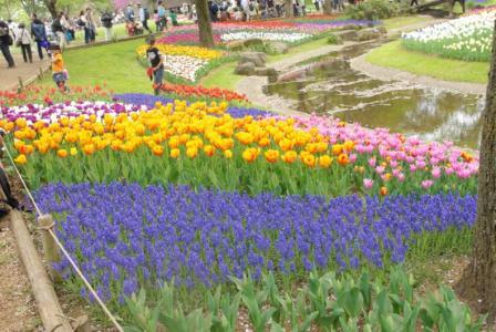 昭和記念公園 13 2011.4.17