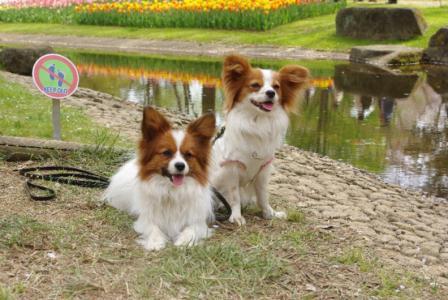 昭和記念公園 10 2011.4.17