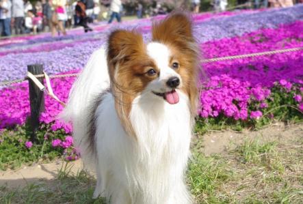 昭和記念公園 20 2011.4.17