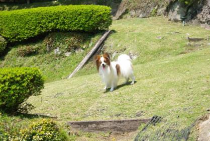 伊豆旅行 31 2011.5.7