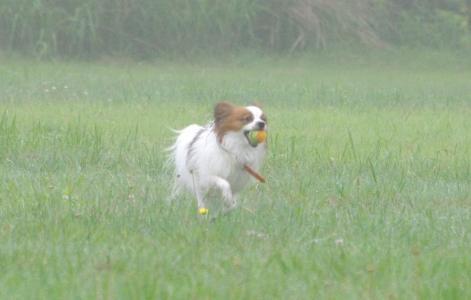 群馬BBQ 31 2011.6.26