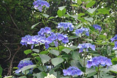 御岳登山 10 2011.7.18