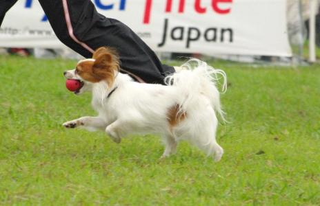 競技会in秋が瀬 21 2011.9.4