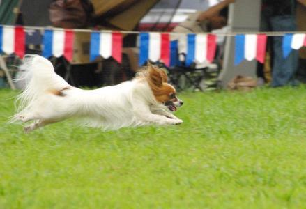 競技会in秋が瀬 26 2011.9.4