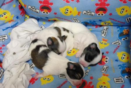 BABY 02 2011.11.20