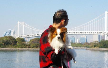 お台場~豊洲 04 2011.11.23