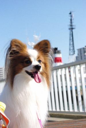 お台場~豊洲 02 2011.11.23