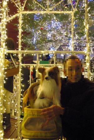 2011クリスマス 03 2011.12.24