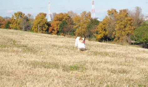 道満 03 2011.12.11