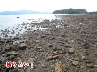 大村公園の海岸    090702