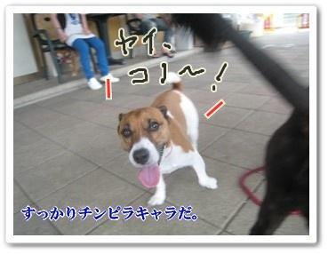 0907020の画 香川県 453