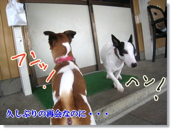 0907020の画 香川県 408