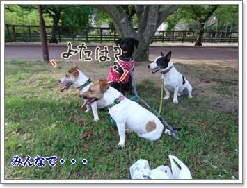 0907020の画 香川県 216