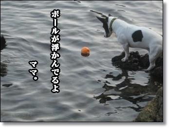 ほら、ボールだよ。