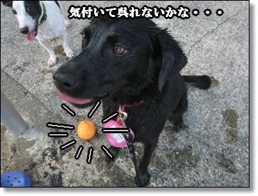 ボール見ろ~ 見ろ~