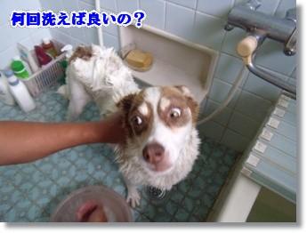 ゴシゴシ洗った。