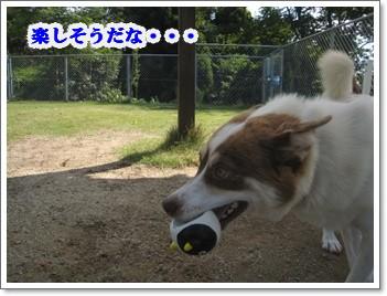 結構ボール好きよ。