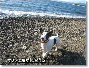 海だね~!