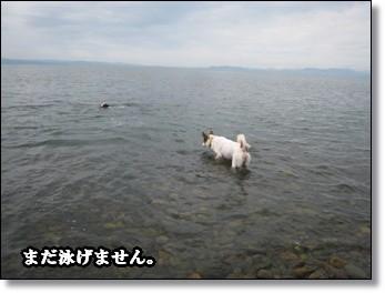 海は良いだろ。