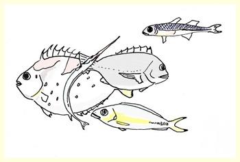 釣れた魚達。