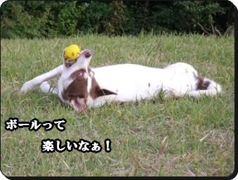 ボールとキーちゃん