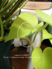 KIF_0075-1.jpg