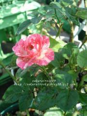 KIF_0108-1.jpg