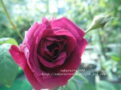 KIF_8895-1.jpg
